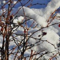 зимний сад :: Наталья Сорокина