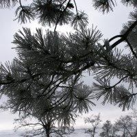 зимний пейзаж :: Ирина Гракова