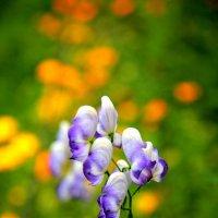 Краски лета :: Александр Коликов