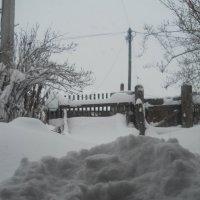 зима  пришла :: людмила токмакова