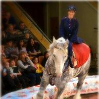 в цирке. :: Лариса Красноперова