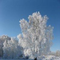 И снова зима :: Геннадий Ячменев