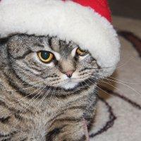 Новогодний котенок) :: Мария Скородумова