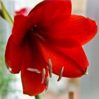 Зимнее цветение :: Олька Н