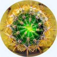 обычный кактус :: Ринат ***