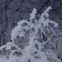 Зимнее цветение... :: ФотоЛюбка *