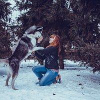 Зимние сказки с Хаски :: Рома Фабров