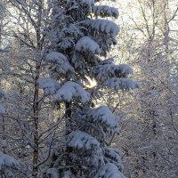 Зимняя сказка :: Евгений Печкин