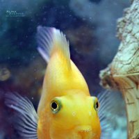 Подводный житель :: Алина Аверина