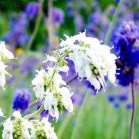 Весенние цветочки :: Svetlana Titova