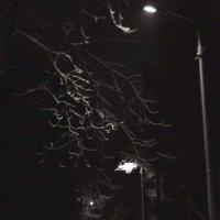 Ночьной парк :: Алексей Кудрявцев