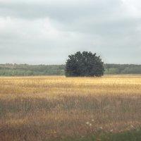 Пейзаж :: Irina Evushkina