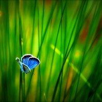 Бабочка лета. :: Алексей Хаустов
