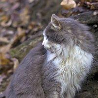 Кошка :: Александр Земляной