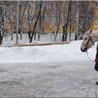 Пауза! :: Владимир Шошин