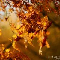 Огненный октябрь :: Зоя Емельянова
