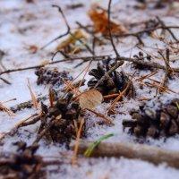В зимнем лесу :: Дмитрий Тарарин