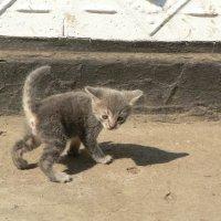 Безымянный пока котенок :: Алла Рыженко