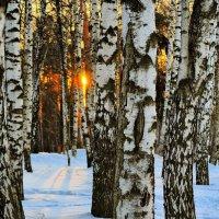 Заблудившееся солнце. :: Дмитрий Блинков