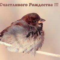 Счастливого Рождества !!! :: Андрей Поляков