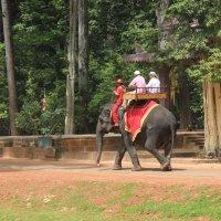 Камбоджа. Приятно прокатиться на слоне :: Владимир Шибинский