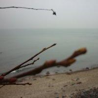зима 2014 :: Oxi --