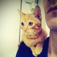 Мой Котэ совсем юный) :: Роман Fox Hound Унжакоff