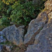 И на камнях растут деревья... :: ирина )))