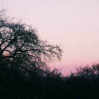 Прорезая небо :: Екатерина Калинченко