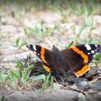 Метелик :: Виктория Голец