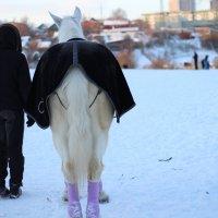 Год лошади :: Елена
