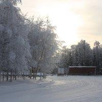 Зимний день :: Светлана Бордачёва