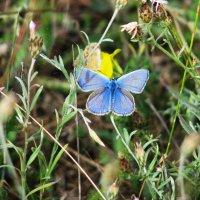 Паучек с бабочкой :: Юрий Яловенко