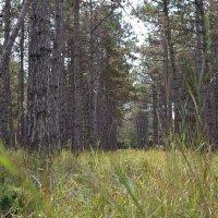 Инкерманский лес :: Lightanna _