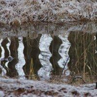 В зеркале- волна :: Алексей Чирков