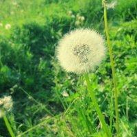 цветочки :: Алсу Михайлова