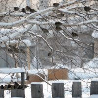 Птичья столовая :: Светлана Франчук