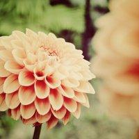 в саду :: Елена Лагутина