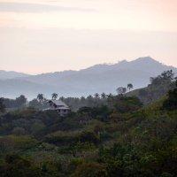 Утро в джунглях :: Мила ...