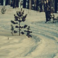 sun on the snow :: Дарья Попова