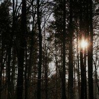 Зимнее солнце :: Evan Andrukhov