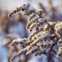 Зимушка -зима. :: Алла Мещерякова