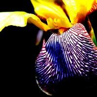 цветок 3 :: Кира К