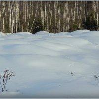 Зимы покрывало! :: Владимир Шошин