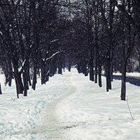 Зимняя тропа :: Illinois c.