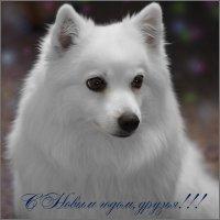 С Новым годом, друзья! :: Владимир Корягин