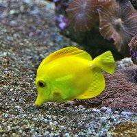 Рыбка :: Наталия Короткова