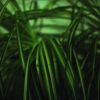 Растение :: Сурикат Сусликов