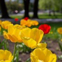 Spring :: Дмитрий Ковалев