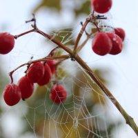 Осенняя роса :: Евгения Бойправ